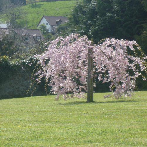 Location Honfleur Studio Le Sous Bois Jardin